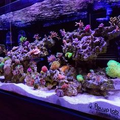 307 Best Awesome Reef Aquascapes Images In 2019 Saltwater Aquarium