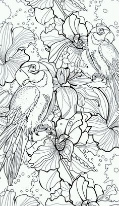adult parrot difficult coloring pages printable and coloring book to print for free. Find more coloring pages online for kids and adults of adult parrot difficult coloring pages to print. Bird Coloring Pages, Adult Coloring Book Pages, Colouring Pics, Coloring For Kids, Printable Coloring Pages, Coloring Sheets, Coloring Books, Colorful Pictures, Birds