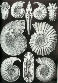 100 Beautiful Illustrations of Biologist Ernst Haeckel - Art Forms of Nature Illustration Botanique, Botanical Illustration, Ernst Haeckel Art, Natural Form Art, Art Vintage, Vintage Images, Poses References, Nautical Art, Vintage Nautical