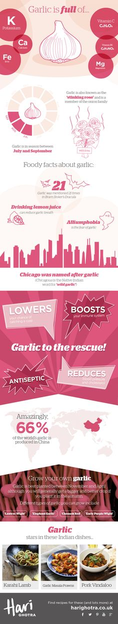 It can ward of vampires, boost your immune system and has antiseptic properties - garlic really is a wonder bulb. Did you know that it is part of the onion family and it's also called the 'stinking rose'. Find out everything you ever wanted to know about garlic from this infographic.