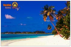Let's celebrate the end of the day dreaming of Cocos Island, Costa Rica... #cocosisland #costarica #beach