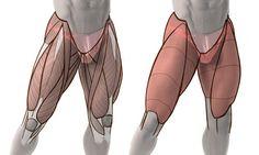 Legs, hips