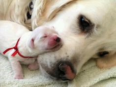 New born puppy sleeping with mommy