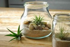 Air plants have only recently come into my life. I spotted them at a general store a few months ago and then recently they showed up a...