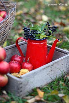 Blueberry: autumn