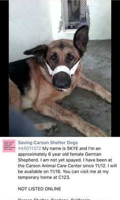 11/14/16 EMERGENCY !! HELP SKYE!! AT CARSON'S CALIFORNIA !! HAS BROKEN JAW!!!/ij   https://m.facebook.com/savingcarsonshelterdogs/photos/a.172032662969376.1073741830.171850219654287/680833308755973/?type=3&theater