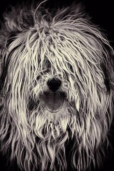 Can't stop smiling! :-) Old English Sheepdog Pet Dogs, Dogs And Puppies, Dog Cat, Doggies, Beautiful Dogs, Animals Beautiful, Animals And Pets, Cute Animals, Old English Sheepdog