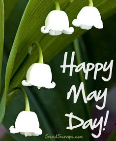 Happy May Day may hello may welcome may may day may flowers may gif Welcome May, Happy May, May Days, Good Morning Good Night, Day Wishes, May Flowers, Pottery Making, Lily Of The Valley, Mayo