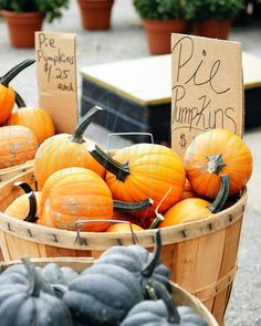 Pie Pumpkins 8X10 Photo Fine Art Photograph Pumpkin Pie Pumpkins - BlueFrogPhoto via Etsy #fpoe