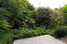 buckley associates Big Garden, Love Garden, Green Garden, Garden Beds, Garden Plants, Unique Gardens, Private Garden, Outdoor Rooms, Hedges