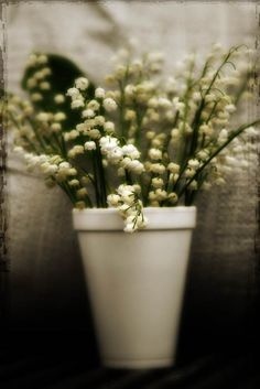 Lily of the Valley by judeMcConkeyPhotos