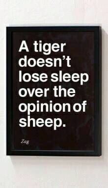 Tigers & sheep