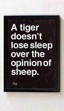 Tigers & sheep