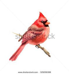 Dropbox - stock-photo-watercolor-bird-red-cardinal-winter-christmas-hand-painted-greeting-card-illustration-isolated-on-329208386.jpg