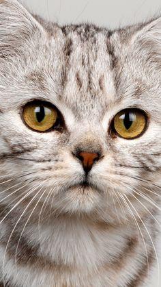 cat, face, striped, eyes, cute, kitten