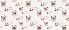 Pug Facebook Cover Photo For Your Timeline