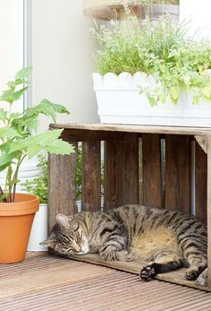 Our cat balcony - the plants-Unser Katzenbalkon – Die Pflanzen In this article you will learn how to create a safe cat balcony with great cat plants, such as catnip, cat gamander, cat grass and valerian. Cat Plants, Balcony Plants, Cat Grass, Cat Hacks, F2 Savannah Cat, Cat Room, Outdoor Dog, I Love Cats, Animals And Pets