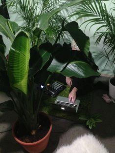 ordinateur et plantes
