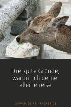Für viele Menschen ist es eine Horrorvorstellung, alleine reisen zu müssen. Ich dagegen finde, dass das Reisen ohne Begleitung durchaus Vorteile hat. Und je älter ich werde, umso mehr schätze ich diese Form, die Welt zu entdecken. Und das aus ein paar guten Gründen. Neugierig? Alle guten Gründe findest Du auf meinem Blog. #Alleinreisen Tiergarten Schönbrunn, Form, Kangaroo, Blog, Animals, Beautiful Graffiti, Group Tours, Travel Alone, Tour Operator