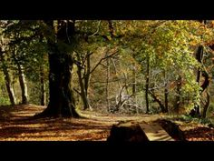 Best of Abraham Hicks ペ Biggest dream coming true after taking Abraham's advice - YouTube
