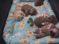 sleeping, dreaming pups. (click through for animated gif of cuteness)