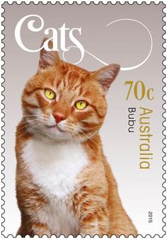 One of the new cat stamps from Australia. About time our favourite pets were acknowledged in stamps.