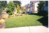 Lawn alternative (seed) $30 1lb