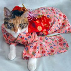 着物・ピンク・小菊柄