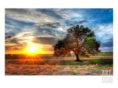 A Sunset on a Texas Farm Premium Photographic Print by Trey Ratcliff at Art.com