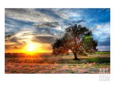 A Sunset on a Texas Farm Premium Photographic Print by Trey Ratcliff at Art.com