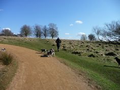 Richmond Park is the largest London Park. Beware! It's easy to loose your bearings once inside! #London #Richmond