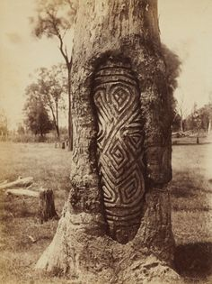 For thousands of yearsAboriginal groups in central New South Wales marked important ceremonial sites by carving beautiful, ornate designs onthe trunks of trees. The carvings, comprising symbolic motifs, intricate swirls, circles and zigzags, were intended to be long-lasting but,instead, only a handful of thetrees on which they were carved are still alive today.