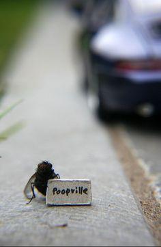 Belgium-based artist, Nicholas Hendrickx, loves to take macro photography of flies doing everyday things