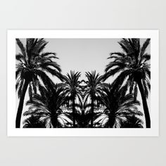 Mirrored image of palm trees. Photo taken in Spain, black and white photography. Collect your choice of gallery quality Giclée, or fine art prints custom trimmed by hand in a variety of sizes with a white border for framing.