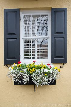 Another window box in Charleston, immaculately kept.