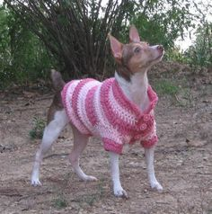 Free Crochet Dog Coat Pattern | Dog In A Sweater: Doggy Fashion Show