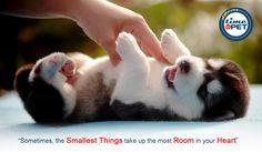 """Love is a four legged word"" #timeforpet #dogs #dog #doglove #doglovers #animallovers #animals #animallove #quotes #animalquotes #quoteoftheday #petcare #petlove #pet #pets #petlovers #fourleggedfriend #cutepets #furryfriends #dogsofinstagram #dogstagram #petstagram #instapets #instadogs #instalove #instahappiness #instagood #happypet #mansbestfriend #bangalore #saturday #weekend"