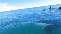 Orcas Cruise Alongside Jet Ski - GIF on Imgur