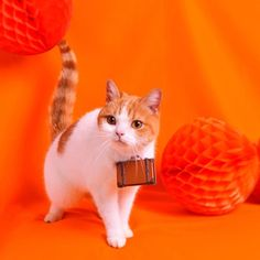 私はにゃらん。 ニャンスタグラムはじめるにょだ♪ #じゃらん #にゃらん #旅 #猫 #ねこ #cat #trip #ニャンスタグラム #おでかけ #Japan