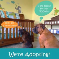 Our Domestic Infant Adoption Announcement Types Of Adoption, Adoption Options, Domestic Infant Adoption, Boxer Dog Puppy, Baby Cookies, Adopting A Child, Baby Fever, Your Child, Announcement