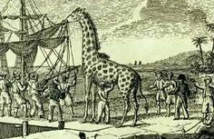 Oh!... France, Mon amour… (49) Zarafa, een giraffe voor een koning! - Nederlanders.Fr
