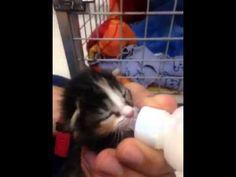 Lo más tierno del mundo. #mininos #gaticos #mascotas #amor