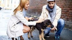 From Petsmart with love: Greatpet lover dating tipsfor pet-loving singles. You're an animal person. You always have been.Maybe it's the fact that you're a Biology major, or, heck, are maybe even a biologist or conservationist…
