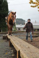Balance Beam - want for horse obstacle course