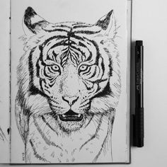 Sketchbook page - tiger. Available as print on various product in my #Society6 Shop, link in bio #fabercastell #fabercastellpitt #sketch #sketchbook #sketchbookartist #tiger #animalart #animalartists #wildlifeartist #katerinakart #art_we_inspire