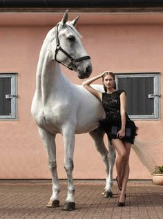 - Art Of Equitation Most Beautiful Animals, Beautiful Horses, Beautiful Creatures, Horse Girl Photography, Equine Photography, Equestrian Style, Equestrian Fashion, Horse Fashion, Horse Photos