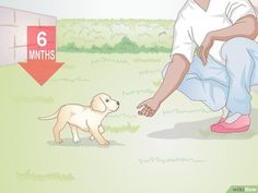 4 Ways to Teach Your Dog to Respond to Hand Signals - wikiHow
