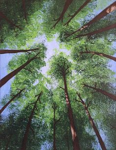 Hey, I found this really awesome Etsy listing at https://www.etsy.com/listing/271396818/redwood-trees-from-below-original