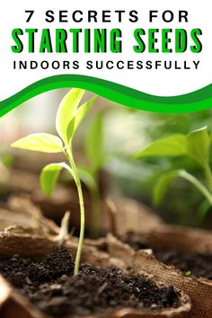 Wondering how to start seeds indoors? These tips for starting seeds successfully are the best way to get started on your gardening journey! This includes when to plant, whether or not you need heat pads or grow lights, your setup, containers and DIY tips. #gardening #gardeningtips #beginnergardeningtips Gardening For Beginners, Gardening Tips, Indoor Gardening, Growing Vegetables, Growing Plants, Aquaponics, Hydroponics Setup, Starting Seeds Indoors, Seed Starting