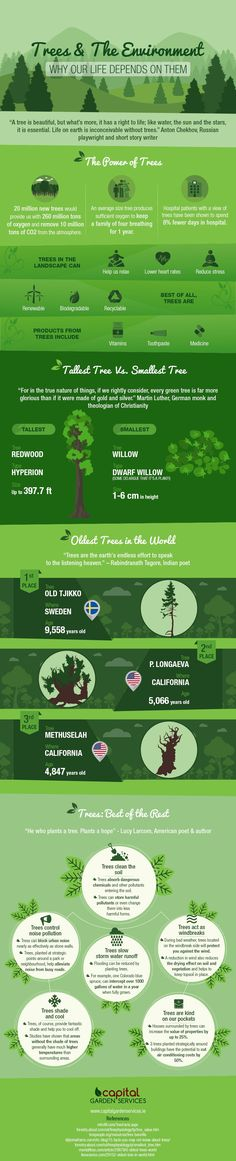 Are Way More Powerful Thank You Think - Infographic Trees Are Way More Powerful Thank You Think - InfographicThe Way The Way may refer to: Earth Science, Life Science, Science And Nature, Science Fair, Science Lessons, Environmental Studies, Environmental Health, Health Education, Higher Education